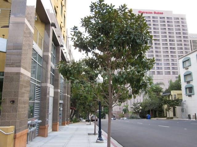 cortez-blu-condos-cortez-hill-downtown-san-diego-92101-20