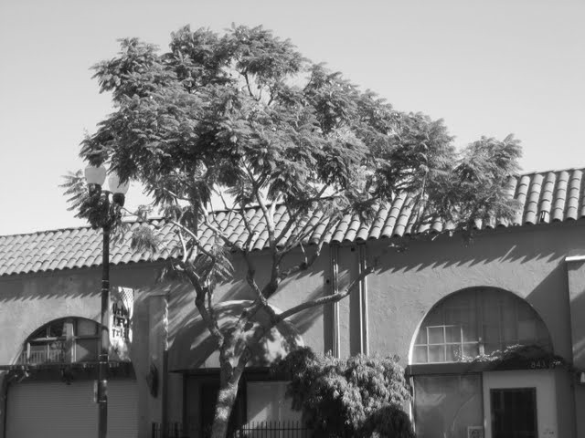 jacaranda-studios-east-village-downtown-san-diego-92101-16