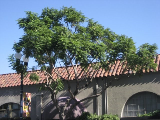 jacaranda-studios-east-village-downtown-san-diego-92101-17