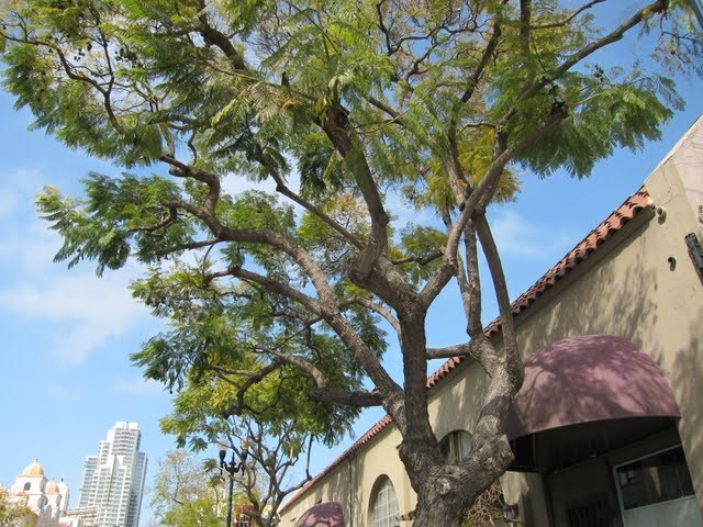 jacaranda-studios-east-village-downtown-san-diego-92101-5